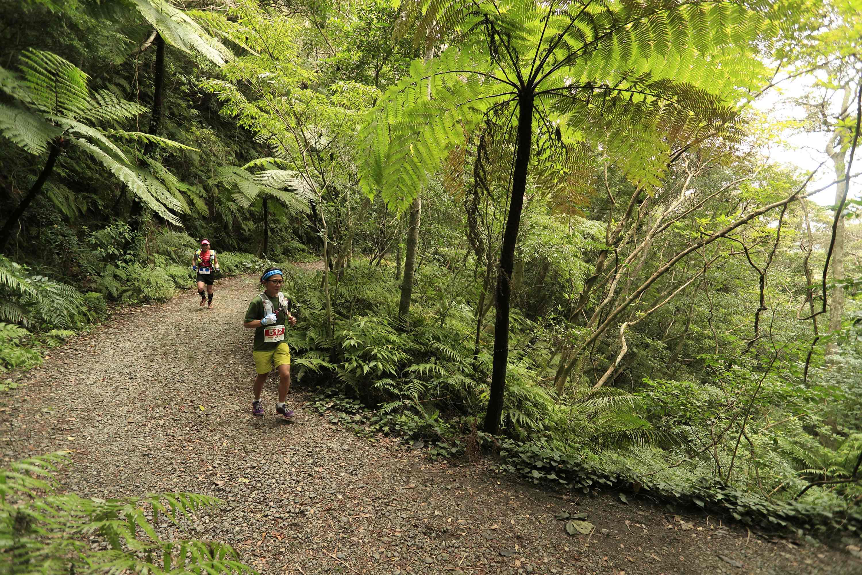 mountain trail dulce pacifico uvita