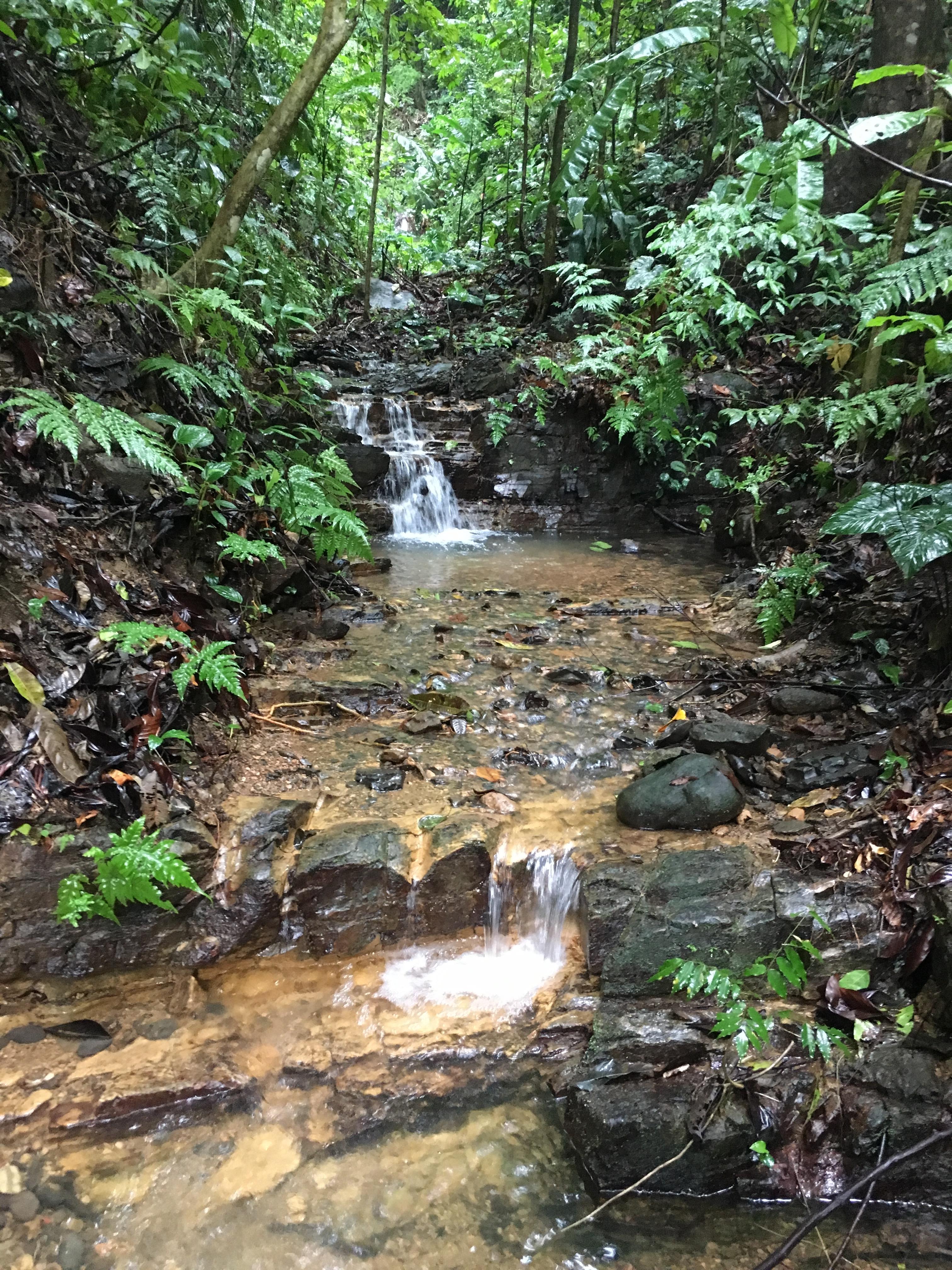 dulce pacifico nature enviromental friendly development uvita